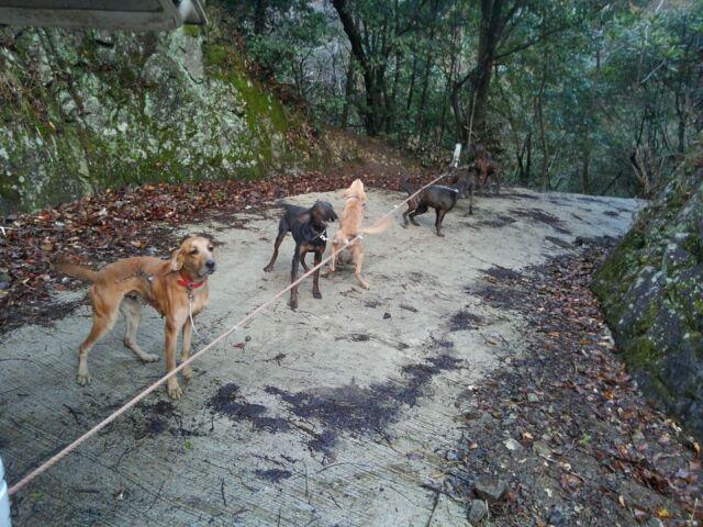 出猟25~27日目 : 猟犬 プロット...
