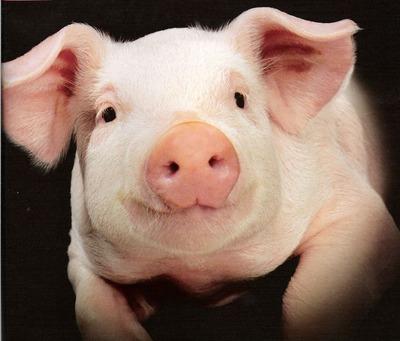 豚%u3000
