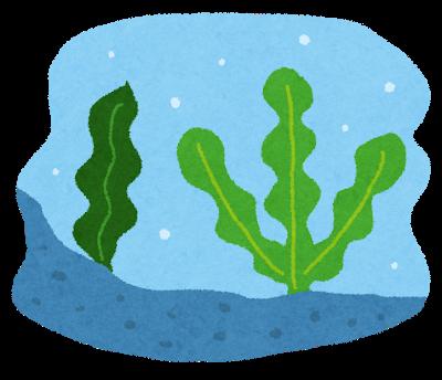 「昆布は植物ではない」←これ以上衝撃的事実ある?