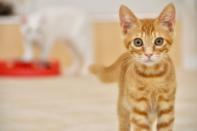 【画像】意外な物で暖を取る子猫が可愛すぎるwwww