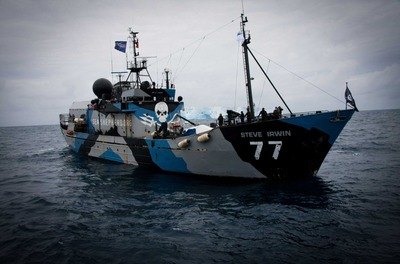 Whaling-in-Japan-Prohibited-Great-Victory-for-Sea-Shepherd