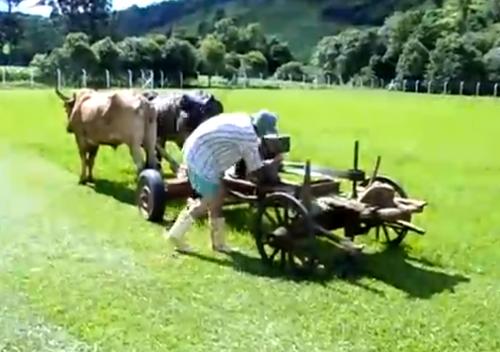 Cow_Lawn_Mower