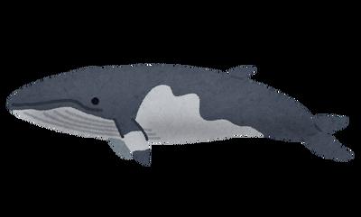 whale_09_minkukujira