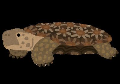 turtle_pancake_rikugame