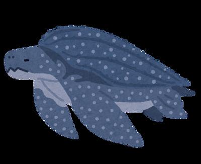 【動画】ビーチに世界最大の海亀が現れてワロタwwww