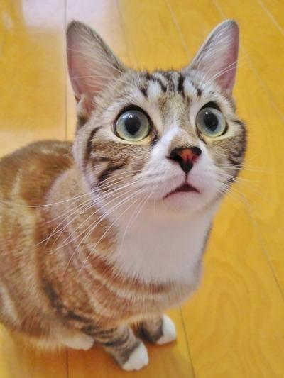 【画像】転ぶと猫になれると言われている坂が想像以上に怖すぎた件wwww
