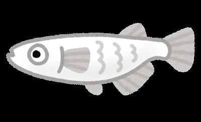 fish_medaka_character.png