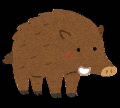 【悲報】BBQをしようとしたらイノシシに肉を食われてしまった……