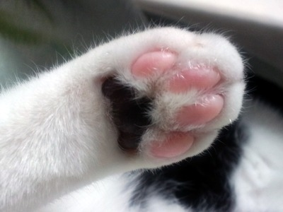 【動画】猫『テーブルの上にアレが落ちてる!隠さなきゃ!』←勘違いして砂かけ仕草をする猫が可愛いwwww