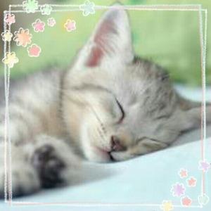 癒し画像 かわいい画像 【画像】朝から元気になる画像 かわいい画像 「春眠ちうZzz」 #pho
