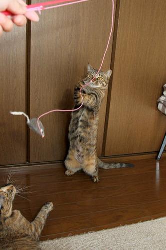 ネズミの掴み取り。