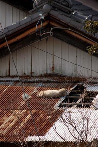 今日は屋根の上。