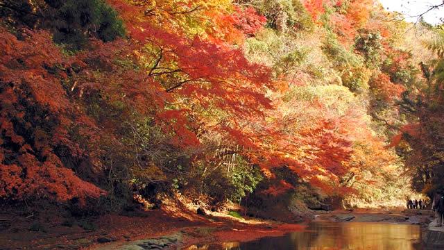 千葉養老渓谷紅葉まつり2018開催。見頃の11月23日~12月7日までライトアップ実施