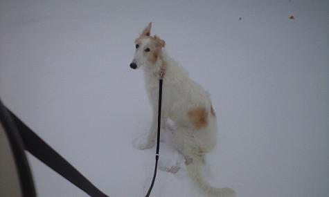 雪の中のジーナその3