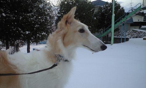 雪の中のジーナその2