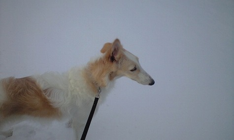 雪の中のジーナ1