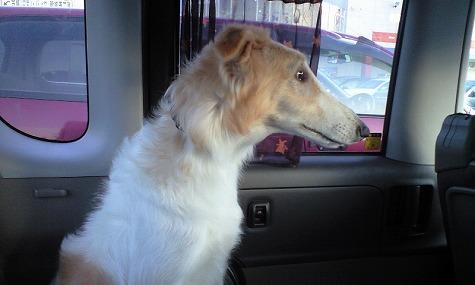 車で警戒するジーナ