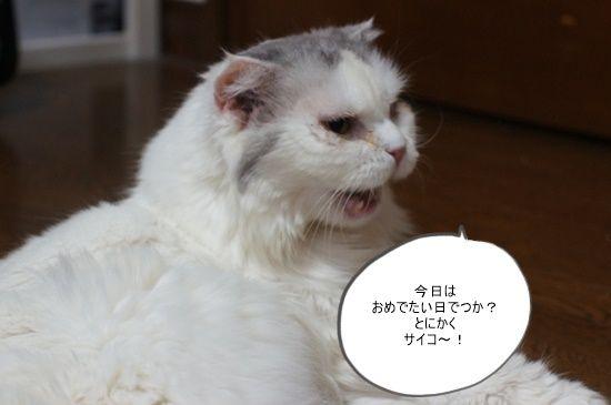 hanako11