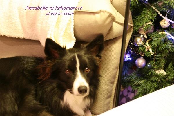 クリスマスツリーとウィル
