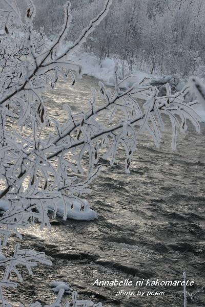 2016.1.16.樹氷