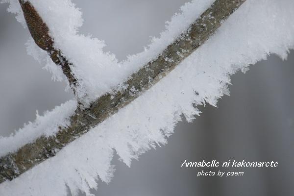2016.1.16.樹氷3