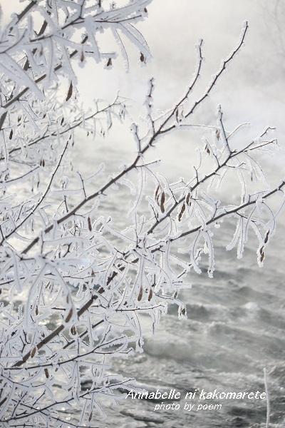2016.1.25.冬景色1