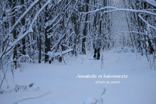 森の中のお散歩
