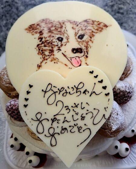 ななこちゃん2歳お誕生日(犬の写真)