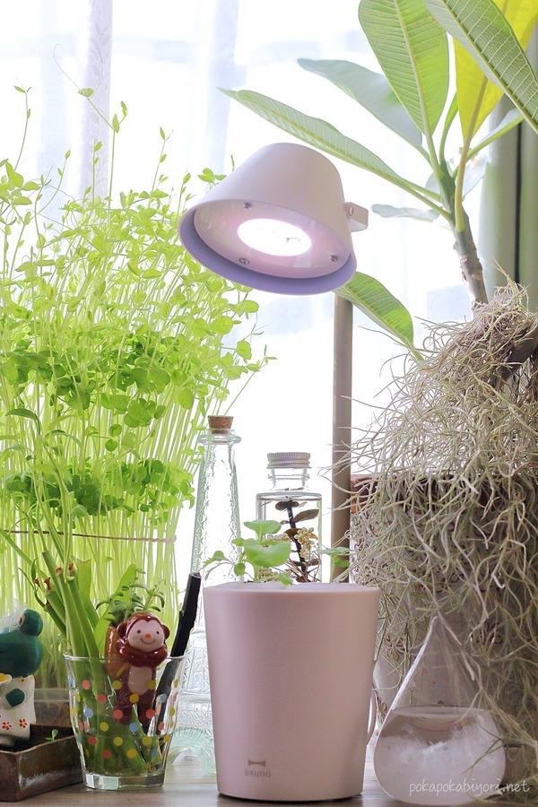 BRUNO水耕栽培キットでインドアガーデニングにチャレンジ|家ごもり時間の癒し