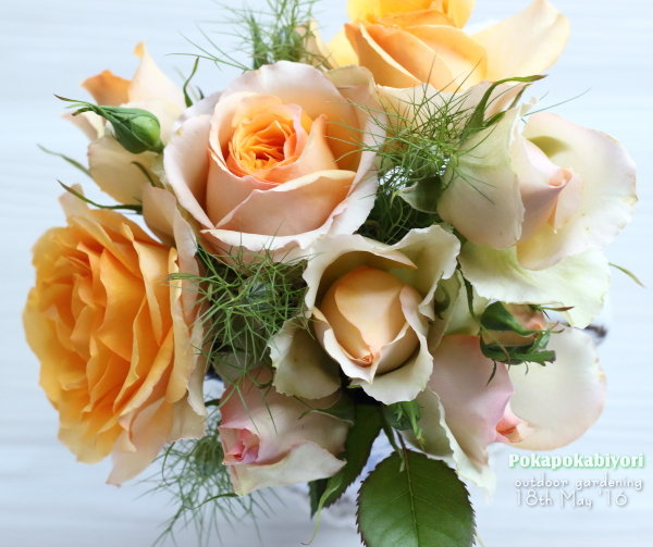 オレンジのミニ薔薇