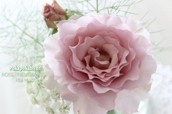 """絶妙な色合いのバラ """"ニューウェーブ"""""""