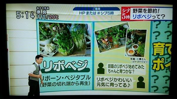 NHK「シブ5時」にて紹介されます & 最近の庭