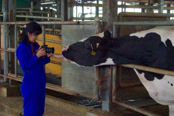 酪農見学& 牛乳を使った人気レシピ