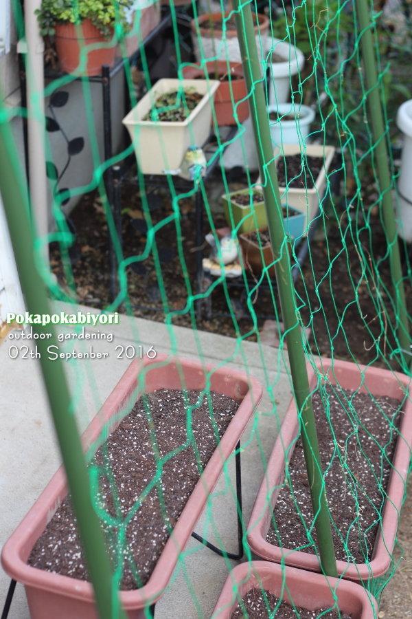夏の緑のカーテンを掃除~蕾ラッシュな庭は秋の気配