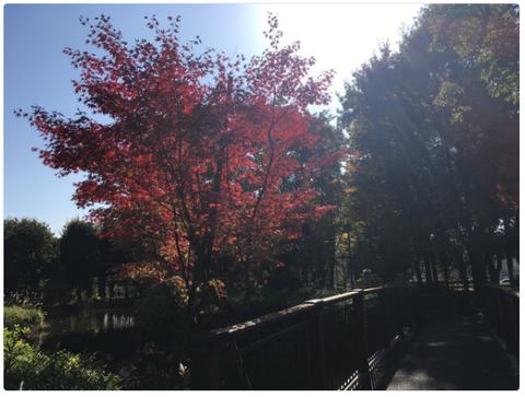 郷土の森公園