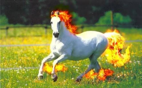 rapidash-real-pokemon