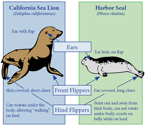 Seal-vs-SeaLion