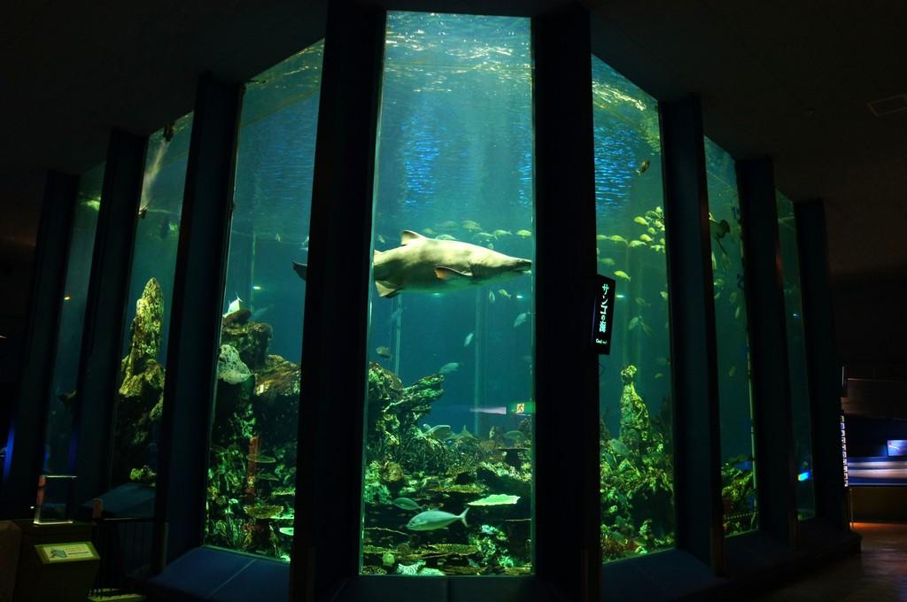 東海大学海洋科学博物館の略称を考えよう。コメントトラックバック