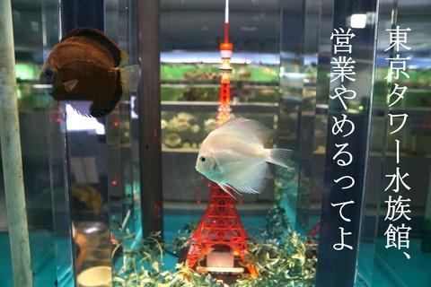 東京タワー水族館閉館