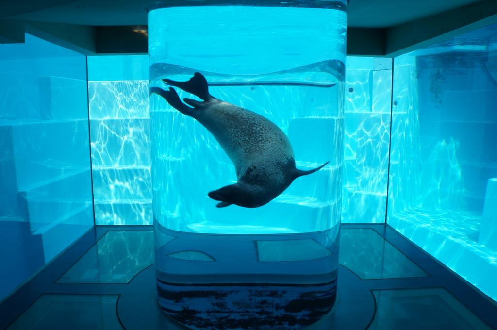 水族館の変わった水槽の画像
