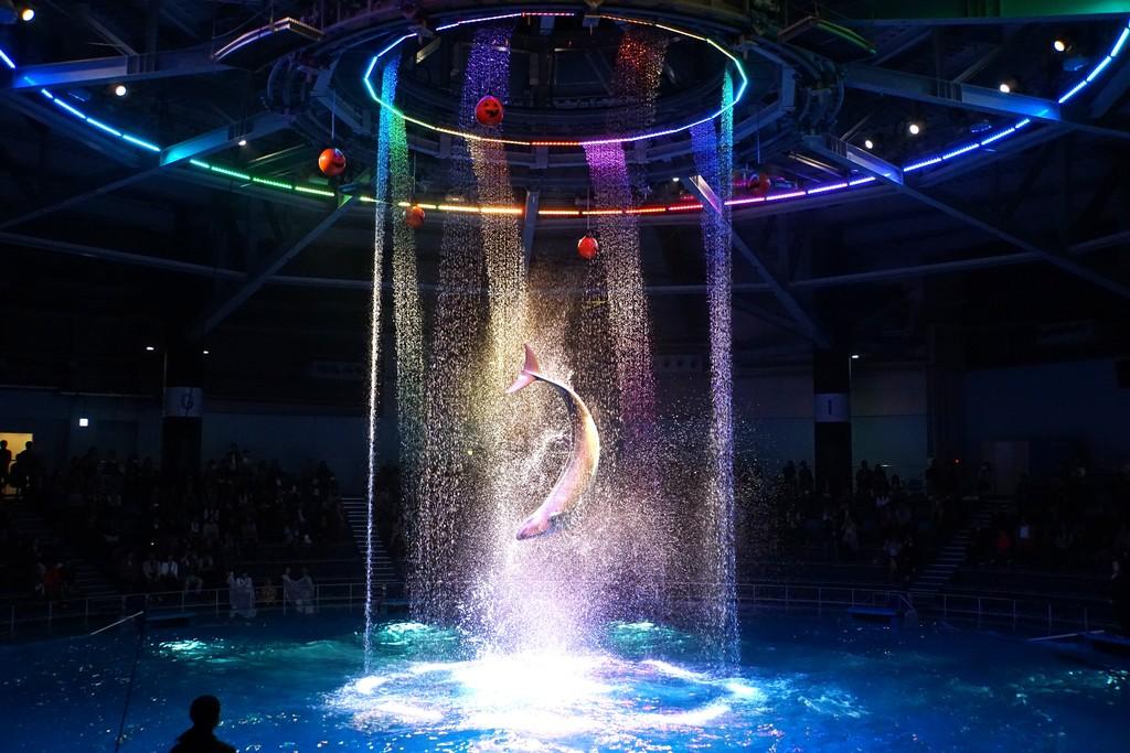 水族館のイルカショーの画像