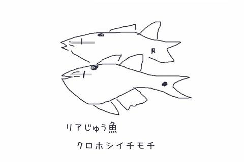 kurohoshiishimochi