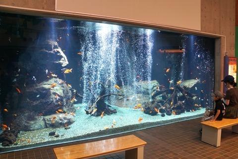 足立区生物園の金魚大水槽