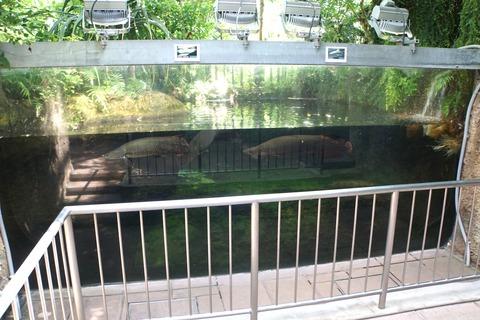 足立区生物園の熱帯大水槽