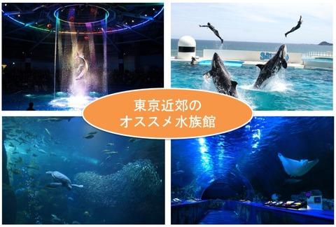 東京近郊のオススメ水族館