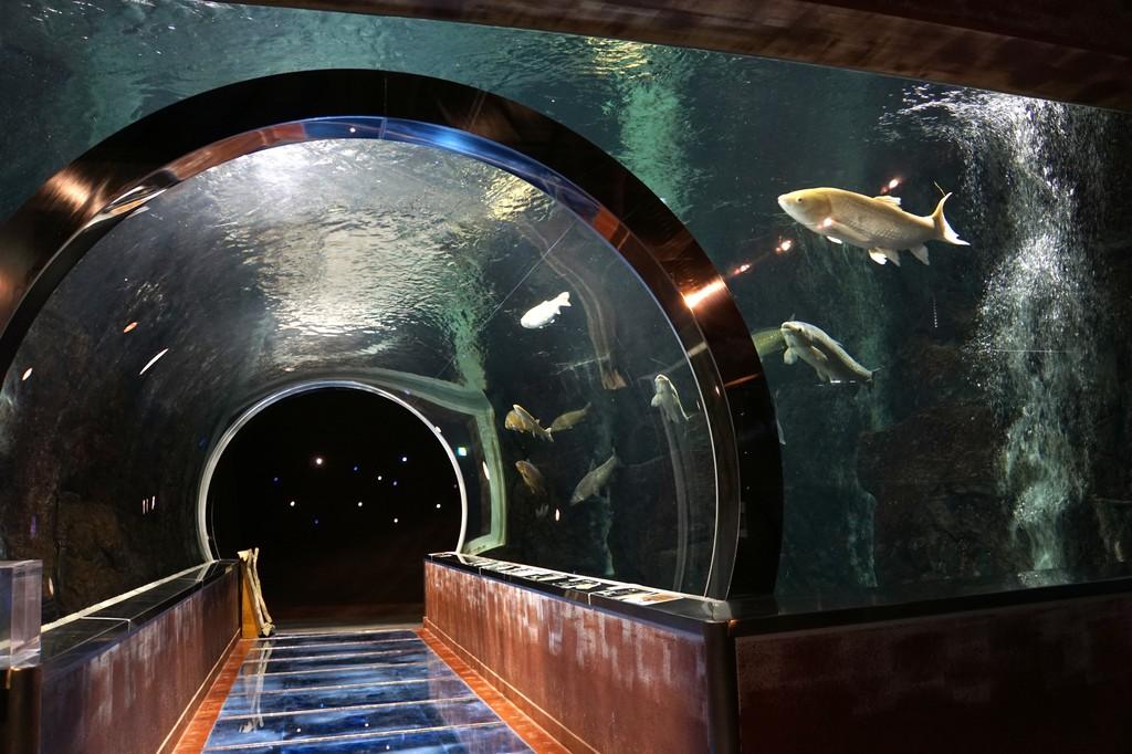 水産学習館トンネル水槽