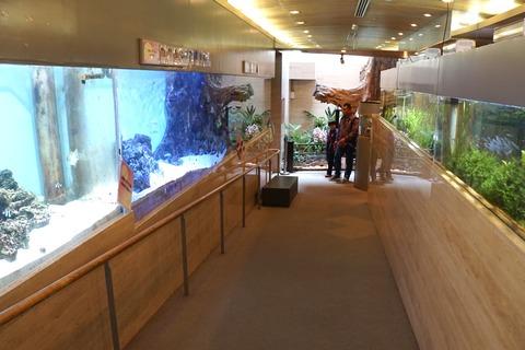 グリーンドームねったい館ミニ水族館