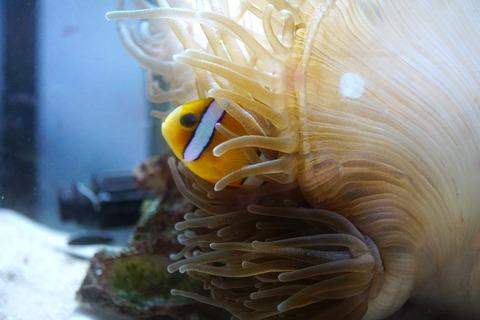 海洋自然博物館マリンジャム