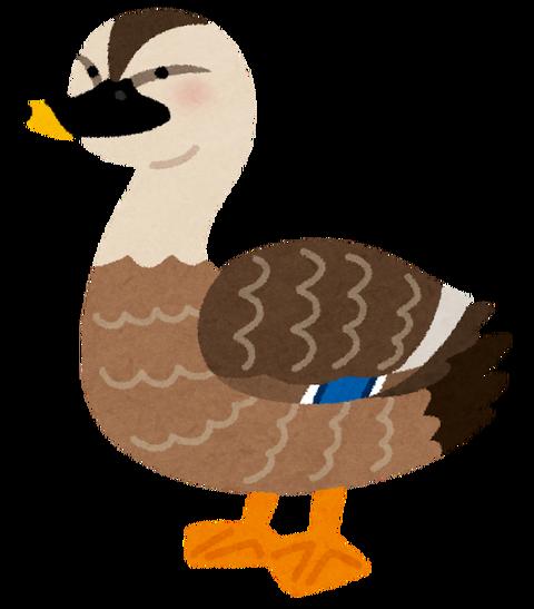 bird_karugamo