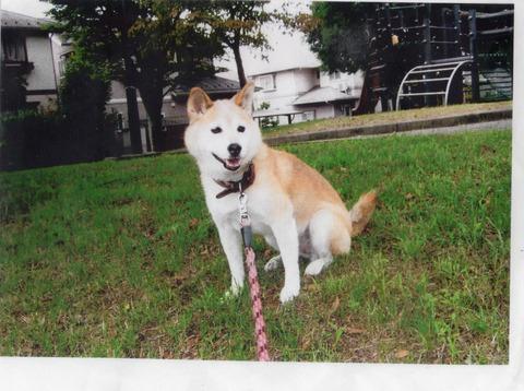 Hana de Familia Kaneko
